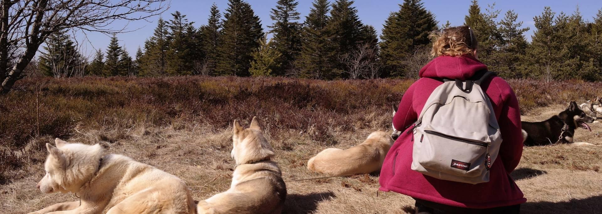 husky cani rando randonnee chien chiens huskies traineau pilat experience temoignage avis crets kimudjuk