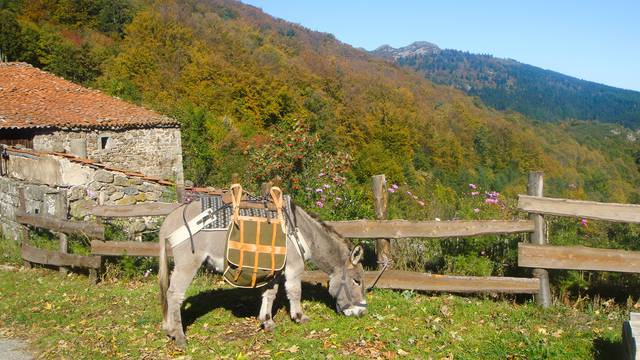 balade avec un ânes