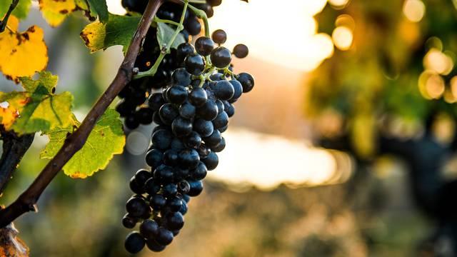 Vignobles du pilat