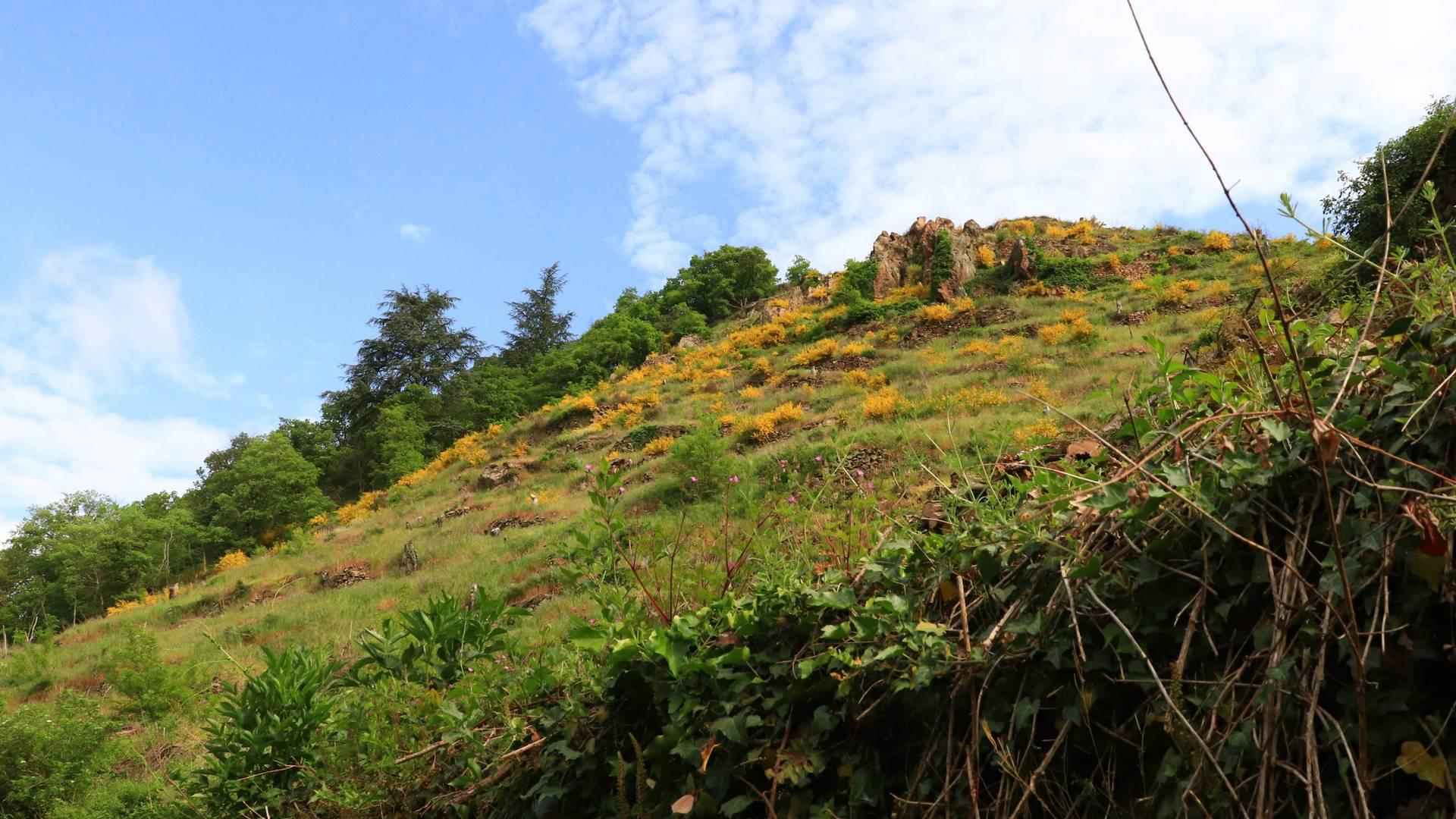 Sentier de l'Arbuel au départ de Condrieu