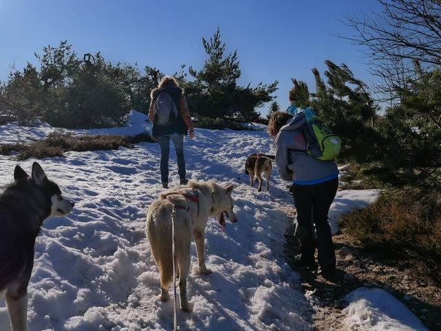 bougez monts du pilat hiver neige raquettes cani rando biathlon laser musher