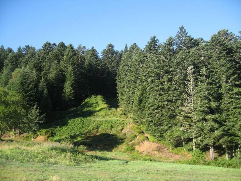 Grands bois pilat