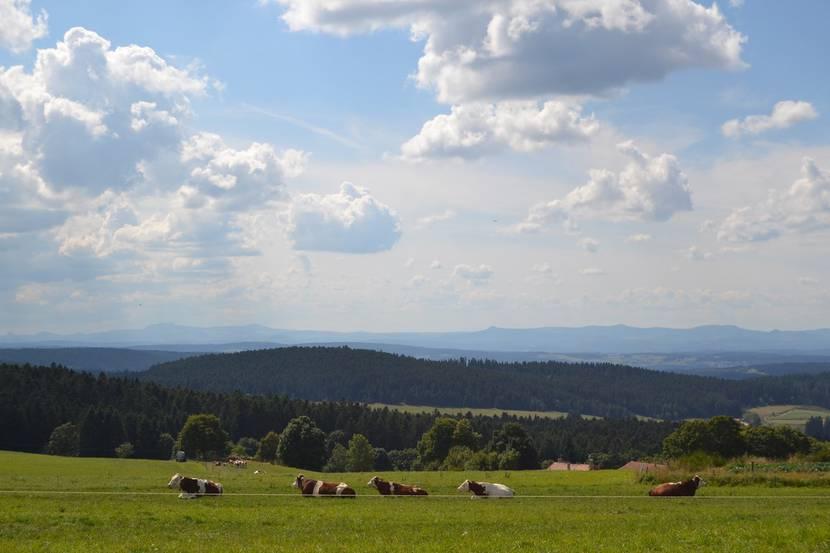 paysage hauts plateaux pilat