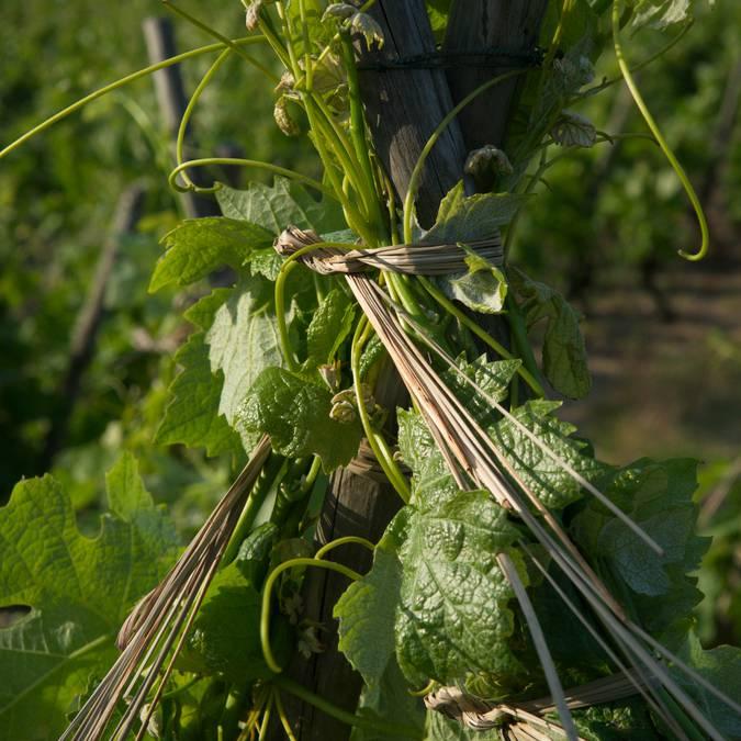 vins côtes du Rhône