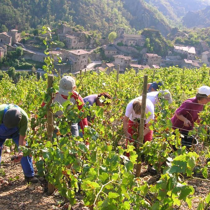 Vignobles à Malleval