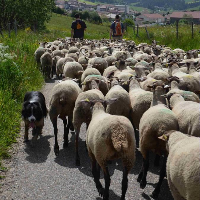 agriculteurs, Pilat
